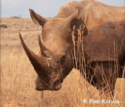 Willem Pretorius Game Reserve Free State South Africa